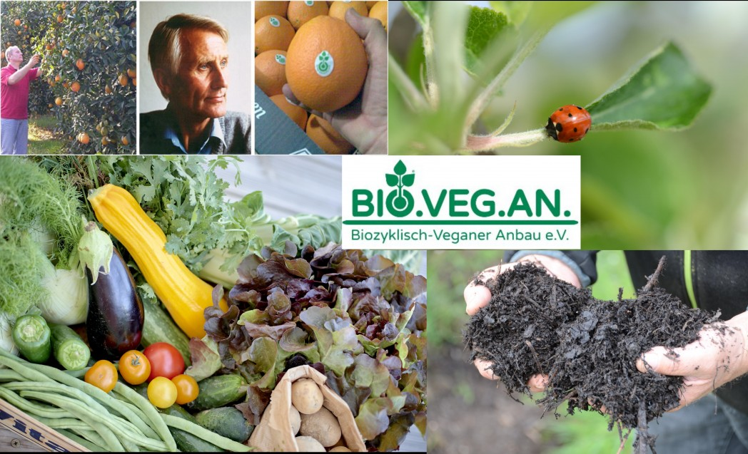 Vegane Sommerküche : Samstag u203a veganes sommerfest berlin